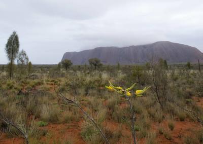 UluruD700C20-9-10046